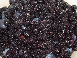 Blackberries and Damsons