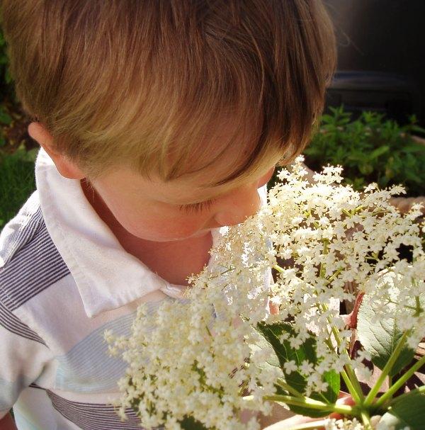 T smelling elderflowers