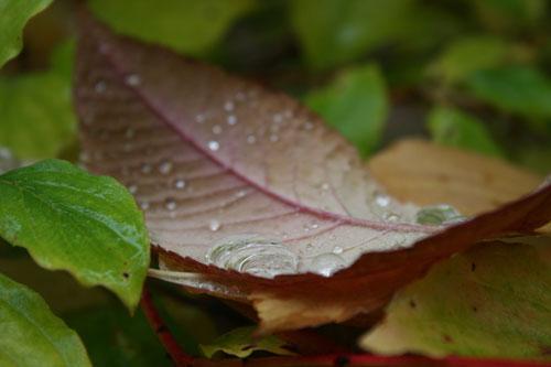 leaf-web
